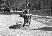 24421 FDHEEMAFF 360 Opname in Artis in Amsterdam van een Orang Oetan met een HEEMAF stofzuiger