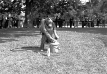 24427 FDHEEMAFF 366 Opname in Artis in Amsterdam van een Orang Oetan met een HEEMAF stofzuiger, 1938-06-30