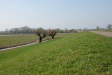 215 DBUITERWIJK-000193 Dijk bij Westenholte, 2009-04-03
