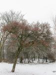 4108 DBUITERWIJK-001503 Winter en Sneeuw in Zwolle- park Hogenkamp in dieze oost., 2013-01-22