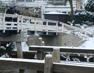 4110 DBUITERWIJK-001505 Winter en Sneeuw in Zwolle- Eendjes voeren bij het Almelose Kanaal, 2013-01-22