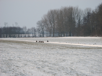 4147 DBUITERWIJK-001543 Winter en Sneeuw in Zwolle - Aa-landen-dijklanden-Urksteeggeregeld zijn er herten te zien, 2013-01-22