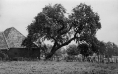 126008 Gezicht op een juttepeer in het weiland bij de boomgaard Hendrikhof (naast Lageweide 27) te Utrecht.