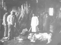 122502 Afbeelding van het slachten van een rund, in een slachthal van het Openbaar Slachthuis (Amsterdamsestraatweg ...