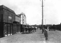 163417 Afbeelding van het vervoer van vee (koeien) op de veelading van het N.S.-station Leeuwarden te Leeuwarden.
