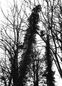 90753 Afbeelding van het redden van een kat uit één van de bomen op het terrein van het klooster Spes Nostra ...