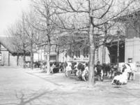 122499 Afbeelding van enkele voor de slacht bestemde runderen op het terrein van het Openbaar Slachthuis ...