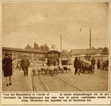 70800 Afbeelding van een kudde schapen bij de ingang van het Buurtstation aan de noordhoek van het Stationsplein te Utrecht.