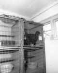 68031 Interieur van het Stichts Asyl voor Dieren (Oude Houtensepad 46) te Utrecht: ruimte met kattenhokken.
