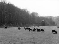 92733 Gezicht op een weiland met een aantal schapen en op de achtergrond de kopgevel van de schaapskooi Rijksstraatweg ...