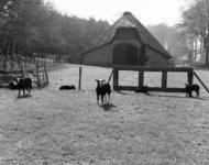 92734 Gezicht op een weiland met enkele schapen en op de achtergrond de kopgevel van de schaapskooi Rijksstraatweg bij ...