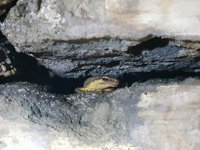 3754 Tijdens de open dag maakt Carly Freeman de foto's van een hagedis* in de spleten van de westgang.*Of salamander? ...