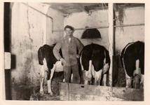 HGOM00000963 Siem Meijn bij de koeien in de stal, hij woonde Middelie 16