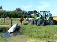 HGOM00000607 Koe van Cees van den Hudding is te water geraakt en wordt middels een trekker uit het water gehaald