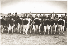 NNC-BM-0001 Keuring koeien op de fokveetentoonstelling