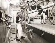 NNC-BM-0028 J. Hartog jr. melkt een koe
