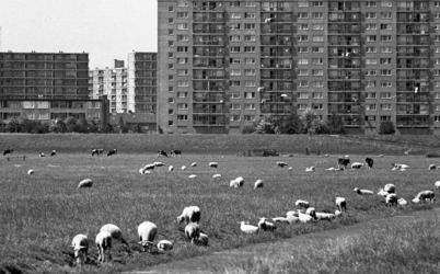 RJ000000916 De oprukkende flats van Purmerend - Overwhere bedreigen de groene polders - 2. (NNC 07-07-1976