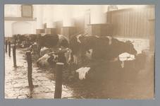 WAT001011145 Als gevolg van een zware noordwester storm brak in januari 1916 de Waterlandse Zeedijk tussen Monnickendam ...