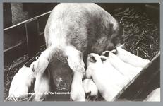 WAT001013177 De varkensmarkt. Tot 1973 werd er op dinsdag de varkensmarkt gehouden in de Willem Eggertstraat en op het ...