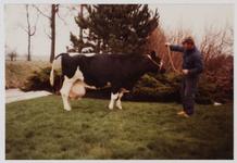 WAT001000552 Koeienkeuring. Koe Geri 33, geboren op 23 januari 1972. In 1984 had Geri 100.000 kg melk gegeven. Boer van ...