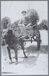 WAT001001531 Hondenkar van Jan Teunis Schot. Hij ventte langs de deuren in Jisp en omstreken met groente en melk. De ...