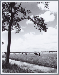 WAT001001669 Aanzicht op een groot weiland in Kwadijk.