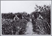 WAT001001682 Tuinbouw in Kwadijk.