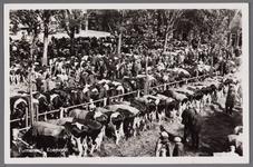 WAT001003373 Koeienmarkt te Purmerend. Op de kop van de koemarkt verhandelde men al sinds 1612 koeien, ossen, paarden, ...