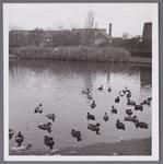 WAT001003880 Het Stadsziekenhuis ontworpen door de Purmerendse architecten Plas en Koning. Op 17 januari 1939 ging de ...