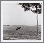 WAT001004576 Polderlandschap met een aantal paarden en koeien in de wei.