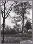 WAT001009469 fot gemaakt vanaf de Emmakade, Plantsoen, rechts vooraan de oudste kastanje van Purmerend.Links achter ...