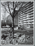 WAT001010186 Bomen verplaatsen Westervenne.