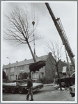 WAT001015514 Boom in takels.Takelwerkzaamheden van boom in de Kolfstraat.