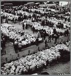 WAT001016192 Nieuwe schapenmarkt tussen Nieuwestraat en Plantsoenstraat.Ruim 3000 schapen in Purmerend.Purmerend. ' De ...