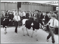 WAT001016196 Veekeuring in de Nukahal. Foto: Een beeld van de provinciale kalverkeuring die voor het eerst in Purmerend ...