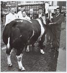 WAT001016199 Veetentoonstelling. Dikbilstier van boer Henk Wijnberg uit Overleek (rechts). Tweede van rechts: Piet ...
