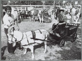 WAT001016206 Voorgrond: Een jongen met een Bokkenwagen.Achtergrond: koeienmarkt. Op de kop van de koemarkt verhandelde ...