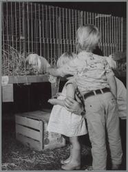 WAT001016425 Niets leuker dan met je kinderen naar een landbouwtentoonstelling, waar je kinderen de konijnen kunnen aaien.