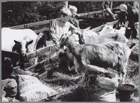 WAT001016426 Niets leuker dan met je kinderen naar een landbouwtentoonstelling, waar je kinderen de geiten kunnen aaien.