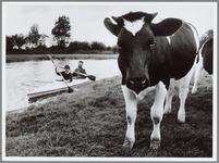 WAT001016431 Echtpaar aan het roeien, je komt dan onderweg bijzondere dingen tegen. Zoals een koe die oog in oog staat ...