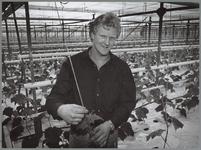 WAT001016441 Foto: Sjaak Strooper in zijn komkommerkas, waar hij sinds vier jaar op steenwol teelt.Van alle in ...