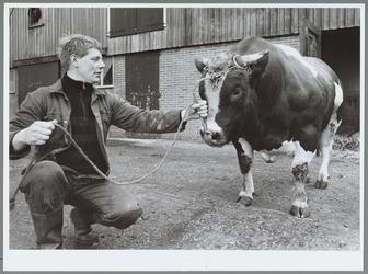 WAT001016454 Foto: Teun Scheringa met spierbundel Peter. De ruim duizend kilo wegende stier brak een record bij de ...