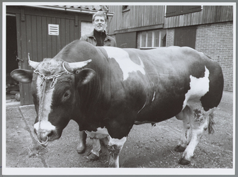 WAT001016455 Foto: Teun Scheringa met spierbundel Peter. De ruim duizend kilo wegende stier brak een record bij de ...