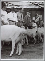 WAT001016456 Foto: Met mooi opgepoetste uiers en de staart in de hoogte laten de geiten de keuring gelaten over zich ...