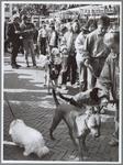 WAT001016457 Hondjes op de Fokveedag tentoonstelling. PURMEREND — Net als in voorafgaande jaren waren de leerlingen van ...