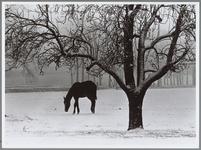 WAT001016485 Paarden in de sneeuw.