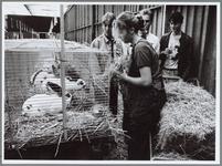 WAT001016522 Konijnen worden gevoerd vlak voordat ze gekeurd worden.De veekeuring was in de Nukahal.
