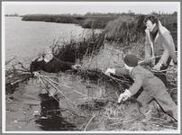 WAT001016548 Overleek 2. Nico Jonker (staand in het water) pakt wilgentenen aan van Wilco van Vuuren en Frank Visbeen ...