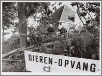WAT001016568 Omgewaaide boom bij Stichting Dierenopvangcentrum Waterland aan de Westerweg.