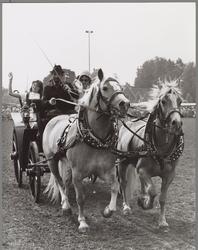 WAT001017242 Paard en wagen.